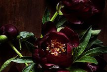 Marsala / Celebrating the 2015 Color of the Year. / by Home Decorators Collection