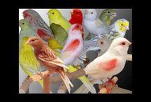 videi / by Daiana C.Viggiano
