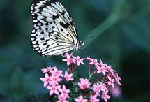 I Love Butterflies  / by Brenda Landon