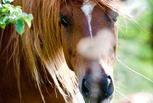 Horses ♥♥