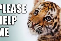 Wildlife Needs You! / by Tracey Bindner