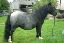 Cryptic Tobianos / Drastically minimized tobiano patterns, suspected of carrying the Cryptic modifier
