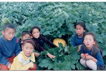 Community Garden Projects in Mongolia / Community vegetable growing projects in Mongolia