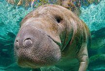 animais do oceano