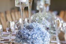 бело-голубая гидрангея