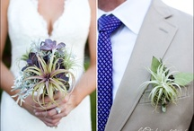 Flower: air plants / by Rose of Sharon Floral Designs