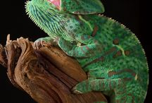 Reptiles / We love reptilians!