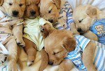Cute dogs / Loads of dogs