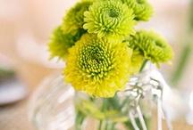 flowers  / by Dolores Gnilšek