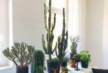 Wohnen mit Pflanzen / Arbeitet an Eurem grünen Daumen und lasst ein paar Pflanzen in Euer Haus! Sie sind so viel mehr als nur ein Accessoire das einstaubt! Sie bringen ein bisschen Leben in jeden Raum!