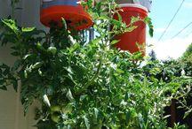 Cool ideas for organic garden