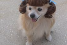 Doggy hairdos  / We love our hair to look perfect, and so do these pups!