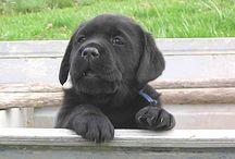 I want a pet. / by Whitney Hamilton