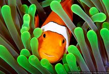 Under The Sea / by Kim Chabert