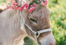 SPRING- Wedding details from Little Bevan