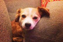 Benny! / Pics of my dearest Benny!