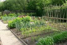 Vegetable Garden / A new vegetable garden