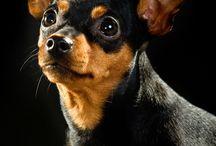 Lemmikki valokuvat / Erilaisia lemmikkieläimiä kuvattuna.