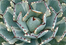 Succulents and blooms / by Belinda Falgout