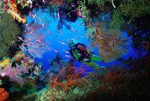 diving:)