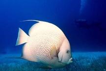 Underwater fishs