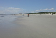 Huntington Beach State Park in Litchfield Beach, SC / This state park offers quiet, non-developed beaches to spend the day. Perfect for families with changing rooms and picnic areas.
