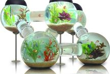 Awesome fishtanks! / by Bobbie Morris