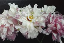 The Beauty of the PEONY! - Katherine Jeans / There is no greater joy than painting peonies.  Commissions welcome.  Katherinejeans.com or www.theartshoppingchannel.com