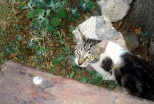 Animals, pets & insect of Grevena - Ζώα, κατοικίδια και έντομα των Γρεβενών / Animals found around the Grevena district - Το ζωΐκό βασίλειο του Νομού Γρεβενών