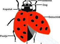 тема насекомые