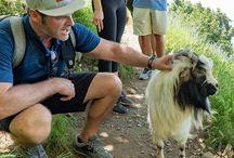 Steven Cox Instagram Photos My new buddy we found on our hike of The Path of the Gods. #pathofthegods #positano #amalficoast