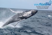 Become whale-whisperer 2015 / It shows pictures of whales and Samaná