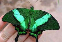 butterfly/bird