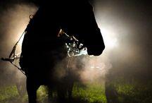 Mistic Horses