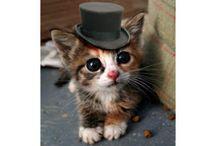 Cute Cats / Little fluffy  cats