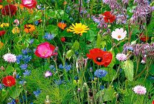 Λουλούδια στην καρδιά