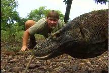 STEVE IRWIN . THE CROCODILE HUNTER .