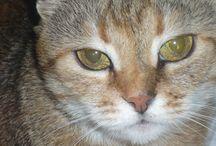 14 octombrie 2000 / Misha este Paraschivuța veșnic vie.... 14 octombrie 2000 este ziua in care Misha a venit în viața noastra... Iași... Codrescu.. E5... 107... Leoaica este unul din puii pe care i-a adus pe lume... Numele Kotoroantza s-a născut din studiul klontzologiei. Numele Kotoroantza s-a născut din obiceiul Kloantzei de a mânca merele cu tot cu kotor... Lungu V. Marilena-Simona este Kloantza Kotoroantza... eu...cea care scriu..