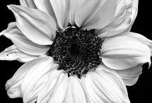 Siyah beyaz