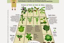 asociacion plantas