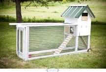 chicken coops / by DeAnna Pickelsimer