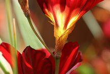 flowers / viragok