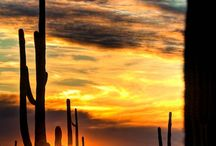 Desert dreams / by Marjolein Peters