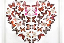 Butterflies, Moths, Dragonflies and Insects / Beautiful In nature and art!
