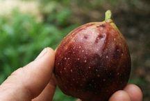 árboles frutales y jardinería