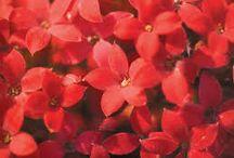 mille fleures