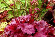 Plantes et Végétaux d'ornement