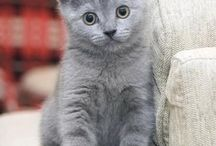 Koty / Koty