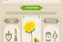 droghe vegetali