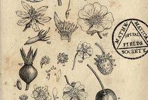 Fauna and Flora Illustration